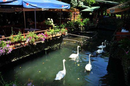 b_450_450_16777215_00_images_albania_pogradec_pogradec-drilon-park-2.jpg