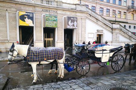 Rundgang durch Wien und ein wenig Fiaker-Geschichte