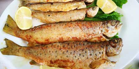 For trout dinner to Pogradec - inexpensive and delicious