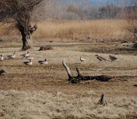 Die Feuchtgebiete am Kerkini See in der Region Serres