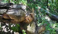 Renaturierungsflächen locken auch Biber zur Donau Insel