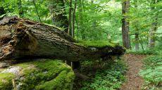 Falkenstein Kalesi Yamaçlarında Doğa ve Kayapark Yürüyüşü
