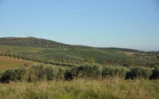 Through the olive fields of Chalkidiki