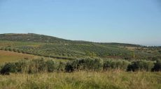 Durch die Olivenfelder von Chalkidiki