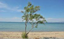 Der Strand von Peraia gegenüber Thessaloniki
