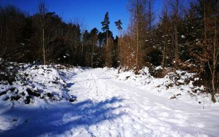 Winter walk in Augsburg Nature Park - Western Woods