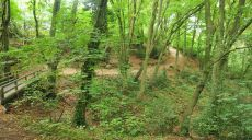 Hike through today's Neandertal - along the Düssel