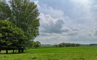 Lush green pasture on the banks of the Rhine - a walk