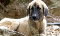 Tollwutverdacht - Impfpflicht für Hunde bei Auslandsreisen