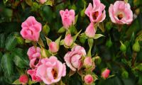 Trip-advice - Visit the European Rosarium in Sangershausen