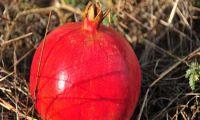 Granatapfel - auch als Saft oder Marmelade ein Genuss