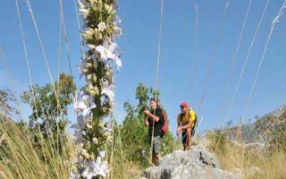 Wandern mit Alaturka - von Omis zur Berghütte und zurück