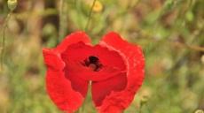 Preisrätsel - Blumen, Büsche und Kräuter