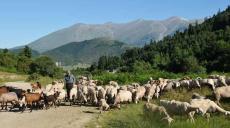 Über Staubstraßen des Olymp von Rapsani nach Litochoro