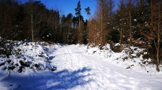 Winter walk in Augsburg Nature Park - Western Woods