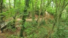 Hike through today's Neandertal - along the Düssel