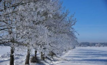 Hoar frost - a miracle of nature when temperature in minus