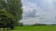 Sattgrünes Weideland am Rheinufer – ein Spaziergang