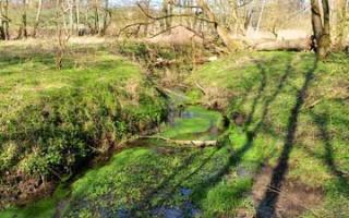 Meadow landscape - a walk along the Lossa
