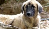 Türkiye'de Sokak Hayvanları