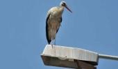 Turkey - Bird Watching at Göksu River