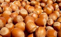 Turkey is the largest hazelnut exporter in the world